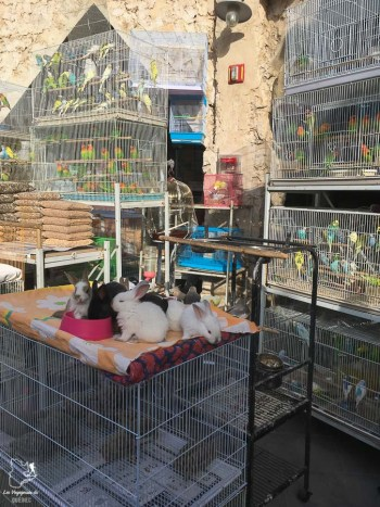 Le marché des oiseaux dans le Souk Wakif à Doha dans notre article Visiter Doha au Qatar: Que faire pendant une escale à Doha de 24 heures #doha #qatar #voyage #escale