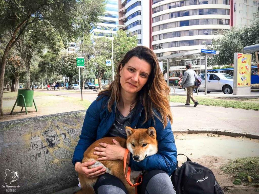 Adopter un chien en voyage, ici à Quito en Équateur dans notre article sur Adopter un chien en voyage : Procédures pour ramener un chien au Canada #chien #adopter #etranger #voyage #procedure