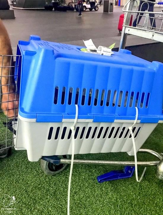 La cage lors des procédures pour ramener un chien au Canada dans notre article sur Adopter un chien en voyage : Procédures pour ramener un chien au Canada #chien #adopter #etranger #voyage #procedure