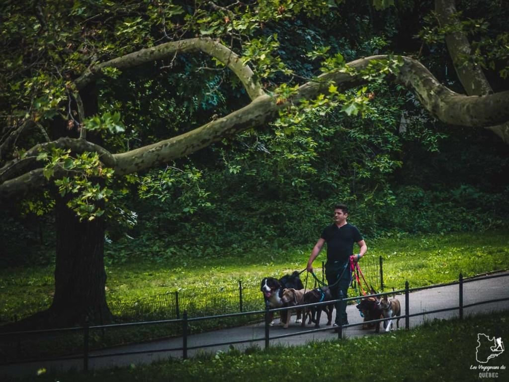 Central Park, quartier de Manhattan à New-York dans notre article Manhattan à New York : exploration urbaine des quartiers de Manhattan #newyork #ville #usa #manhattan #etatsunis #amerique #citytrip #centralpark