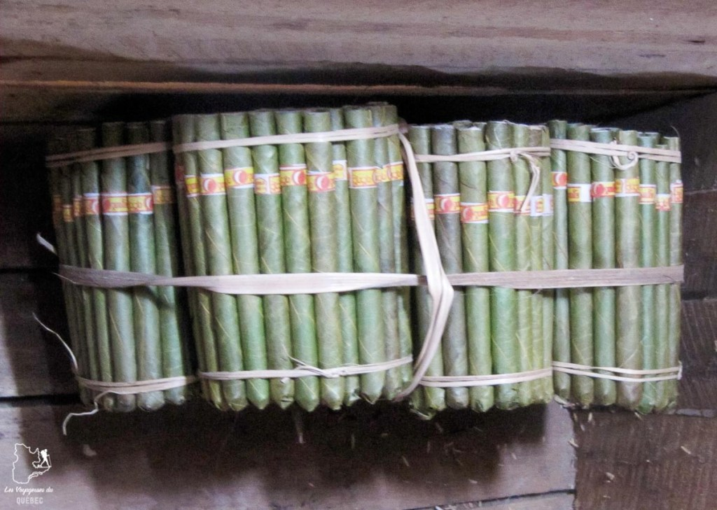 Cheroots, le cigare à tester au Myanmar dans notre article Voyage au Myanmar : Mes expériences et lieux à visiter au Myanmar #myanmar #birmanie #asie #voyage #itineraire #kalaw