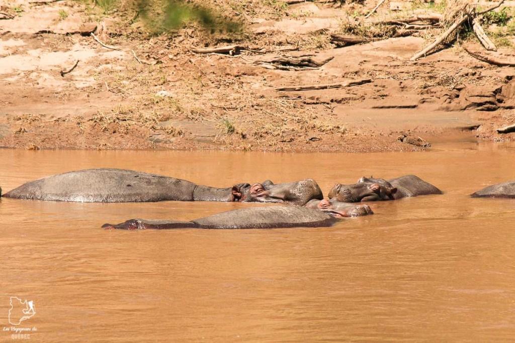 Hippopotames en safari au Kenya dans notre article Safari au Kenya et en Tanzanie : comment l'organiser et s'y préparer #kenya #tanzanie #safari #afrique #voyage