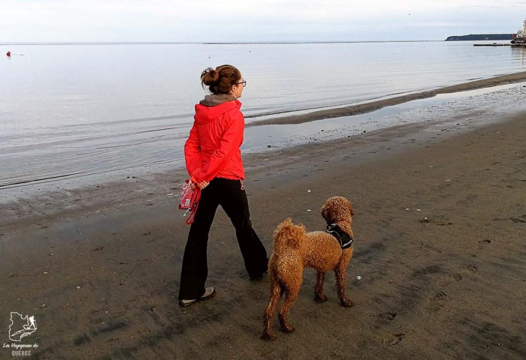 Voyager avec son chien au Québec dans notre article Voyager avec son chien au Québec : Que faire et où aller #quebec #chien #voyager