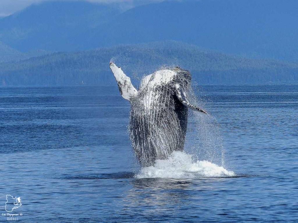 Voir les baleines à Tadoussac dans notre article Voyager avec son chien au Québec : Que faire et où aller #quebec #chien #voyager