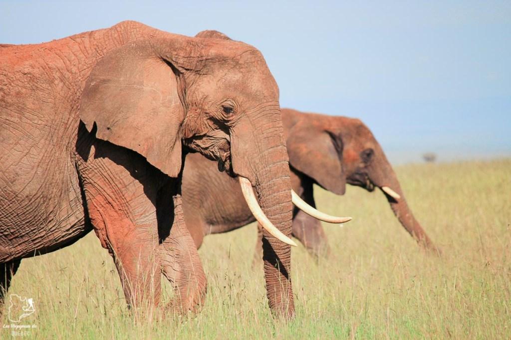 Éléphant lors d'un safari en Afrique dans notre article Safari au Kenya et en Tanzanie : comment l'organiser et s'y préparer #kenya #tanzanie #safari #afrique #voyage