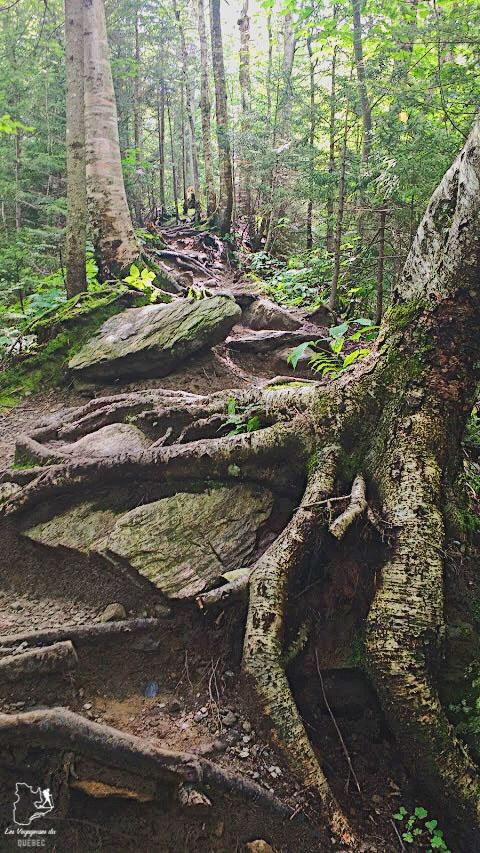 Randonnée pédestre au Parc environnement naturel de Sutton dans notre article La randonnée au Québec : 8 randonnées pédestres au Québec testées et approuvées #randonnee #randonneepedestre #quebec #canada