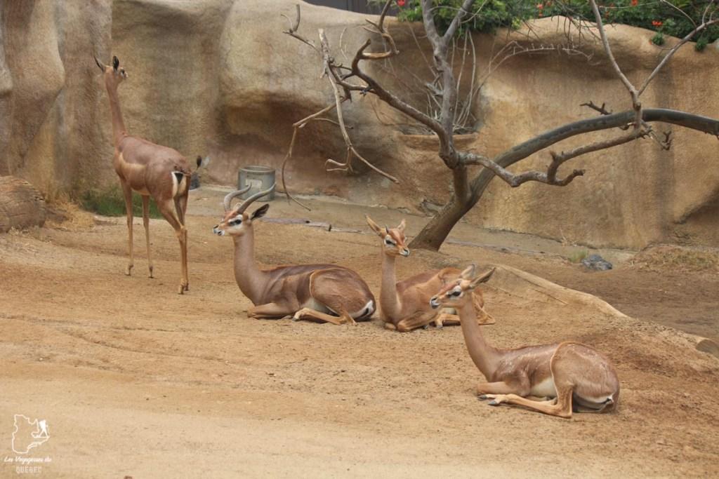 Safari Park de San Diego dans notre article Visiter San Diego aux USA : Que voir et que faire à San Diego en 3 jours #sandiego #californie #usa #voyage
