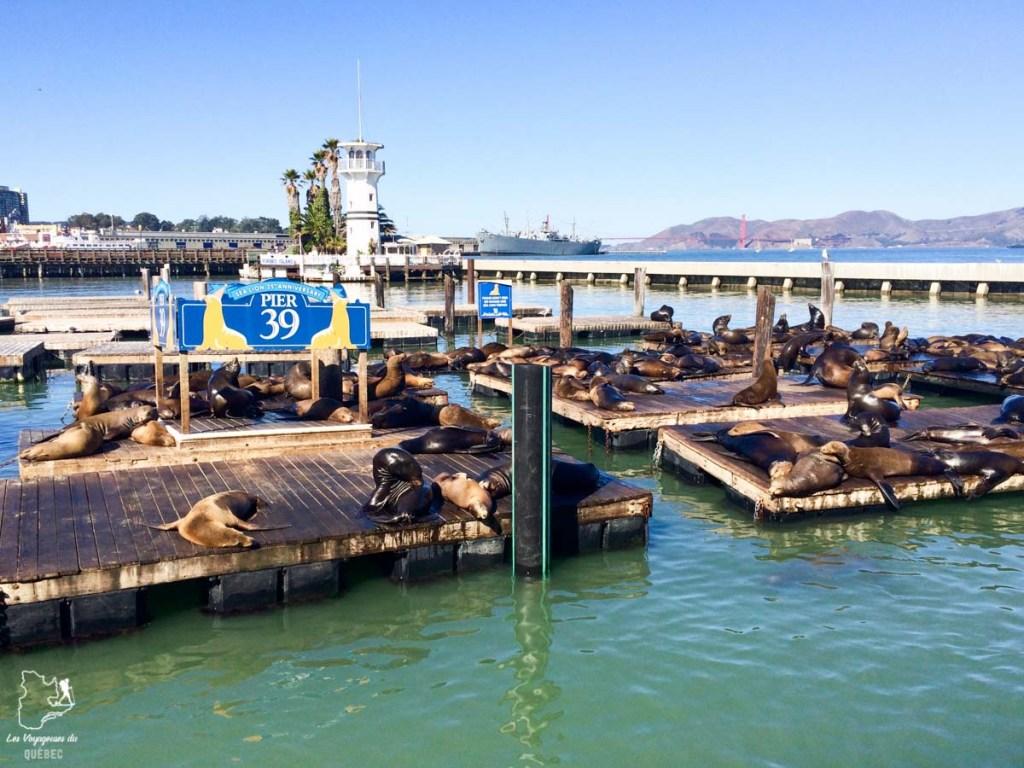 Pier 39 de San Francisco dans notre article Que voir à San Francisco aux USA : ma découverte de la ville en 7 jours #sanfrancisco #californie #usa #etatsunis #voyage