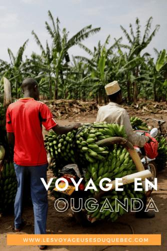 Voyage en Ouganda : aller à la rencontre des gorilles de montagne en Ouganda