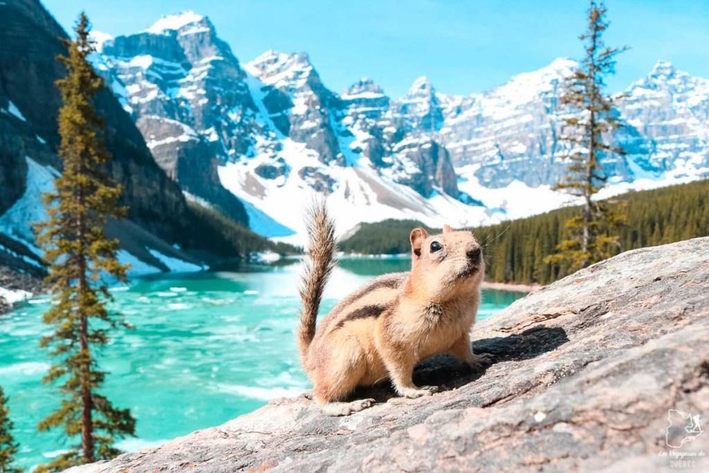 Lac Moraine en Alberta dans notre article Visiter le Canada autrement : Ma traversée du Canada hors des sentiers battus #canada #roadtrip