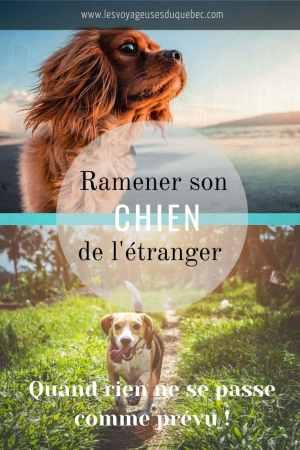 Ramener un chien de l'étranger, quand rien ne se passe comme prévu #chien #voyage #anecdote
