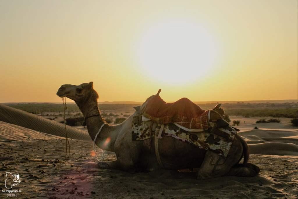 Balade en chameau dans le désert de Thar au Rajasthan dans notre article Visiter le Rajasthan en Inde : Itinéraire et conseils pour un voyage dans cet État du Nord de l'Inde #rajasthan #inde #itineraire #voyage