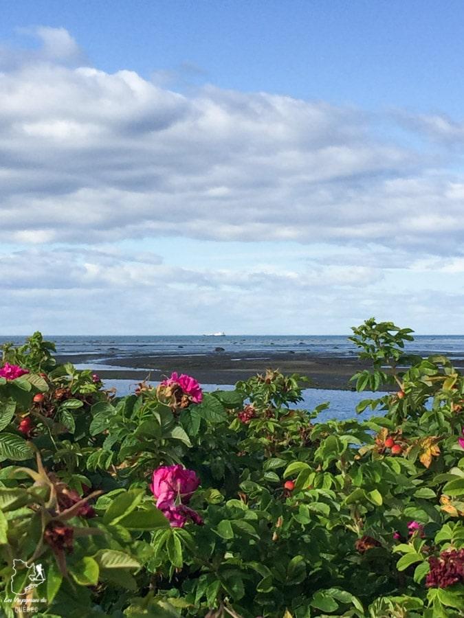 Randonnée dans le Parc du Bic dans le Bas-St-Laurent dans notre article Visiter la région du Bas-Saint-Laurent, c'est tomber en amour avec le bas du fleuve #basstlaurent #bassaintlaurent #basdufleuve #fleuve #quebec #canada #voyage