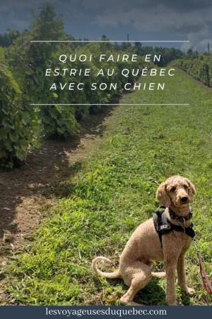 Quoi faire en Estrie avec son chien : mon itinéraire pour visiter l'Estrie avec Pitou #estrie #cantonsdelest #quebec #bonjourquebec #canada #chien #roadtrip