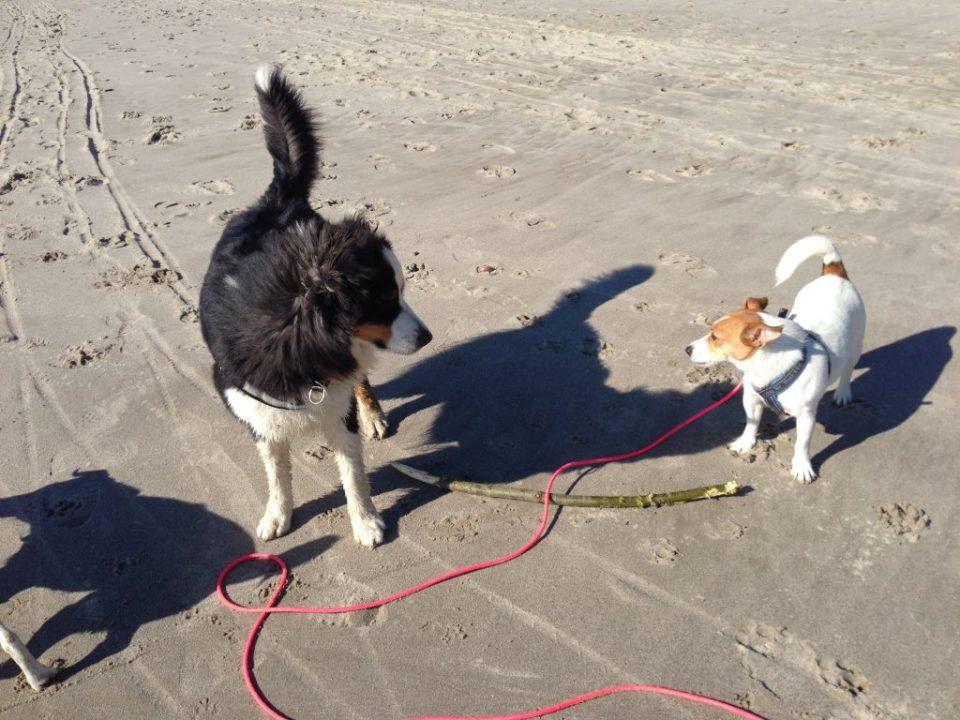Zwei-Hunde-Spaziergang