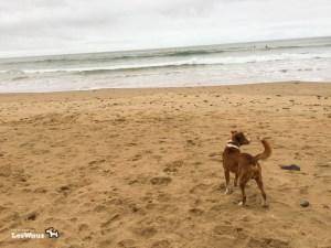 Hund-am-Strand-Port