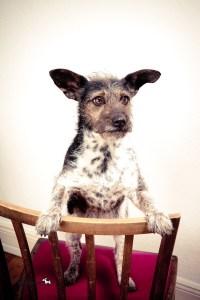 Hunde DNA Test7