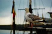 Fête de la Mer 2015 Les Yeus Dans La Hune