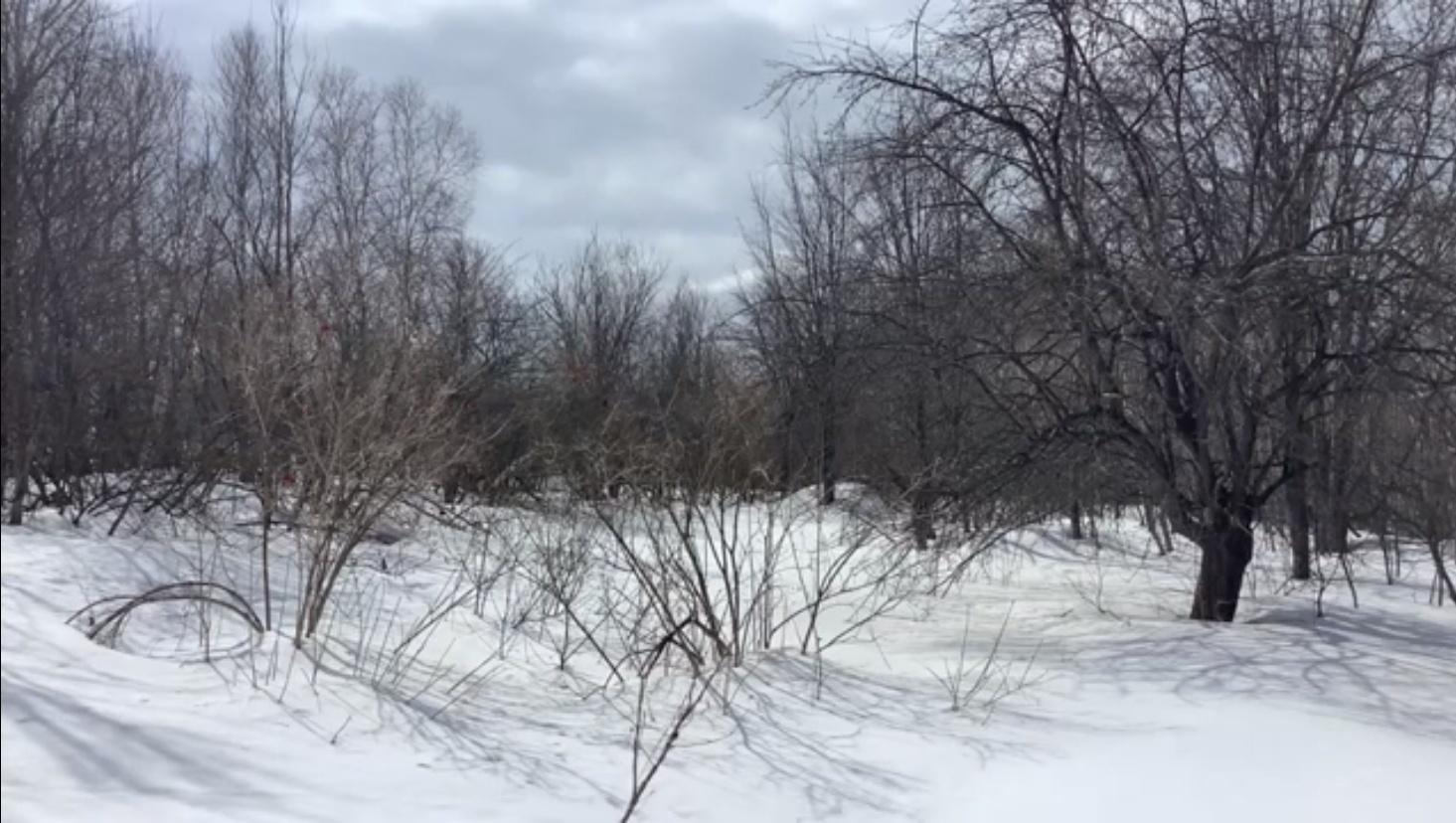 ZEN (Slow Tv) - Bruits de la forêt enneigée