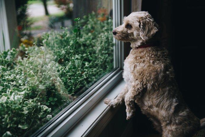 Les avantages des fenêtres en PVC