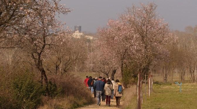 29 avril | journée en lisière de la ville avec projection, bourse aux plantes, randonnée découverte, repas…