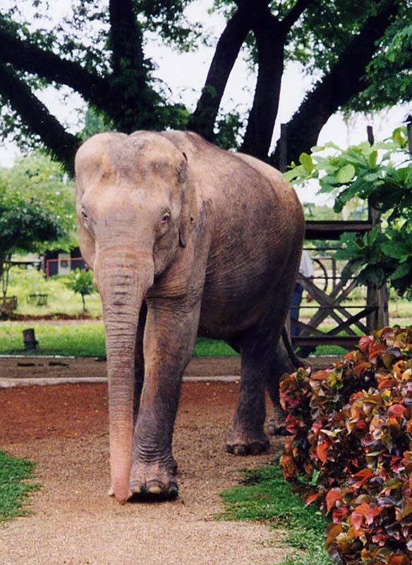 Les Zoos Dans Le Monde  Lao Zoo