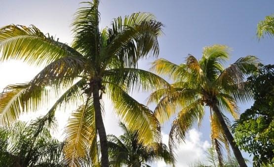 Guadeloupe - Z letalom na poti