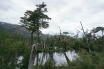 Marécages ou mangroves ?