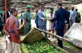Agriculture: Quand le gouvernement se risque à relancer la filière cacao