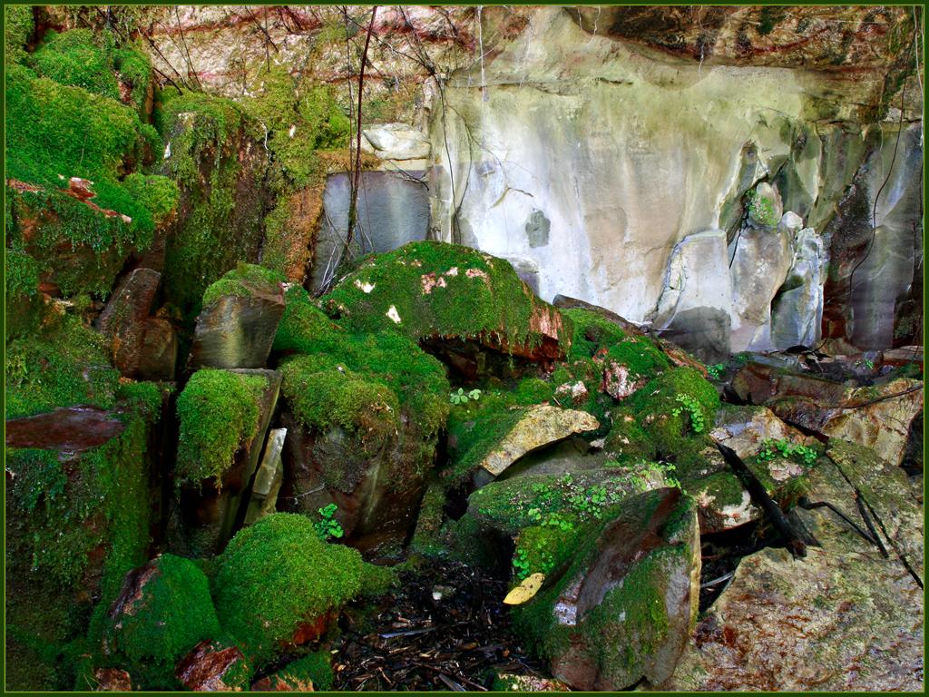 Moss Garden Let S Go Travel Australia