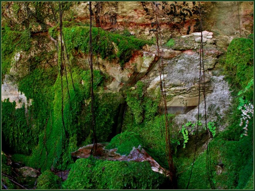 Moss Gardens2
