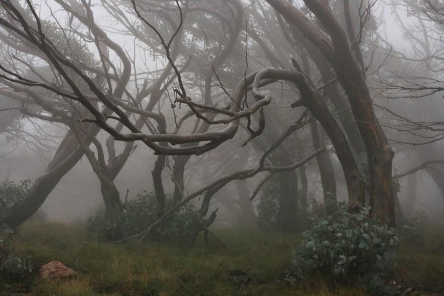 Foggy-Trees