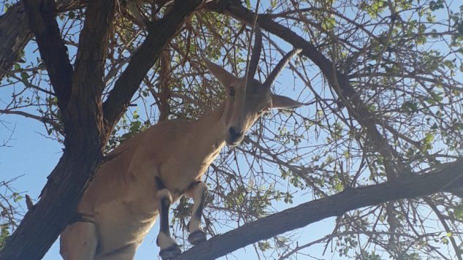 Kozy na stromě?!