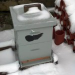 Snow-melt on top of un-insulated hives = Vigor