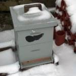 Snow-melt on top of un-insulated hives = Vigor
