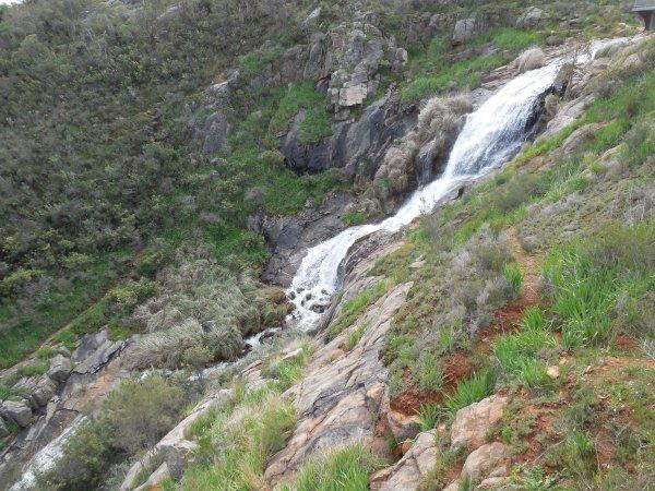 Camp Ondessonk Wildflowers Waterfalls Wineries - Year of