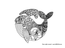Adult-Coloring-Page-Whale-Letmecolor.com_