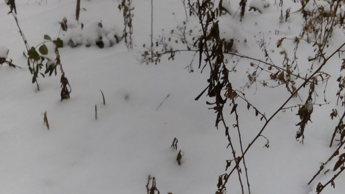 """ALT: """"sanjarenja u snegu"""""""