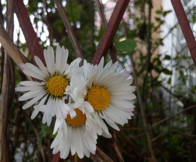 Od čega cvetaš