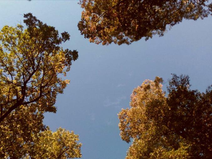 Izađi u tišinu. Izađi među drveće.
