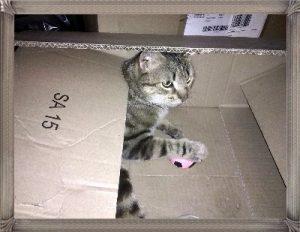 Le top des testeuses YARRAH Alimentation pour chats Animaux Chats