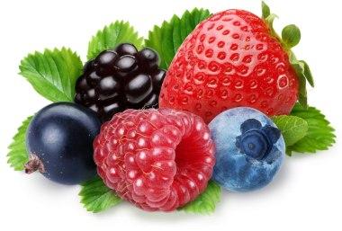 berriesBianchi