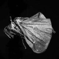Insectos en la poesía española