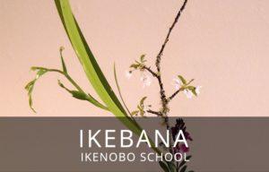 Ikebana: Sogetsu  School - Beginners  / Ikebana: Escuela Sogetsu  - Principiantes