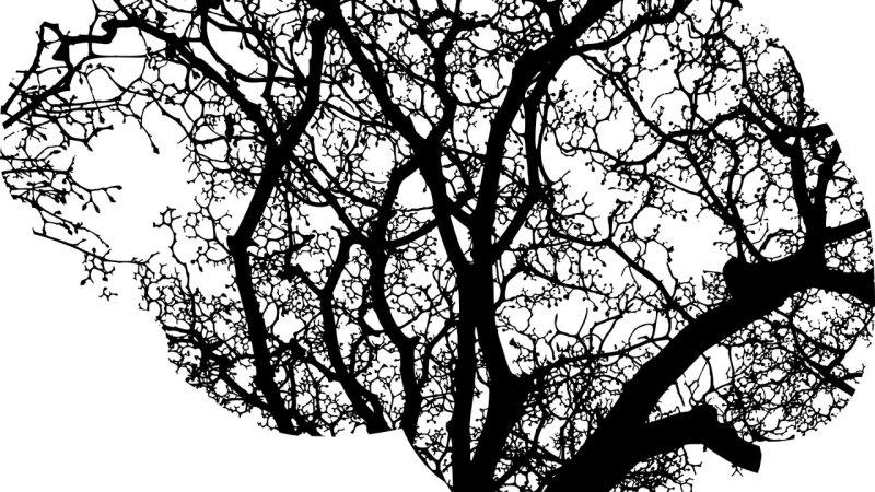 El sistema inmune de la mente | Letra Urbana