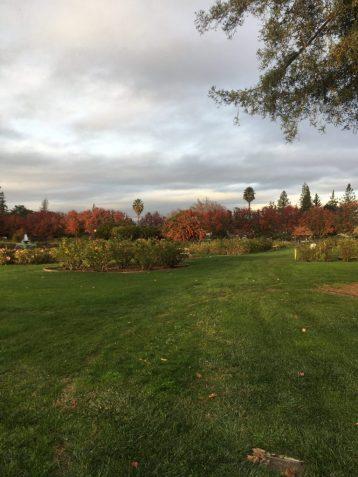Rose Garden in San Jose California