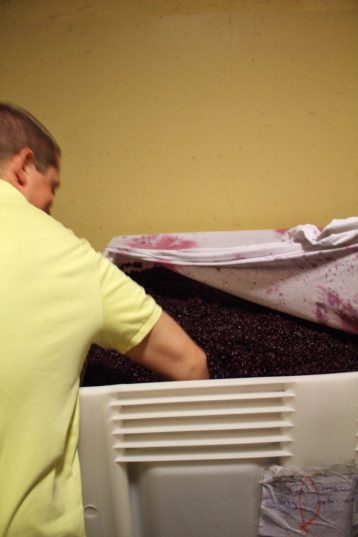 Eric mashing the grapes to be made into wine in Tuscany