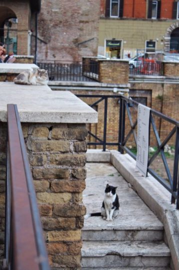 Largo di Torre Argentina Cat Sanctuary Rome Italy