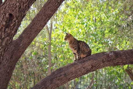 Cat at Ancient Agora Athens Greece