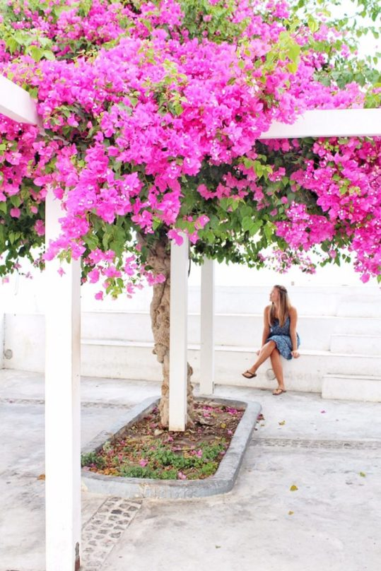 Lauryn sitting under Bougainvillea in Oia, Santorini, Greece